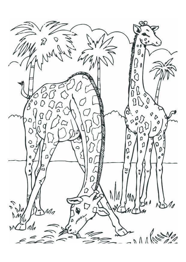 Malvorlage Giraffe