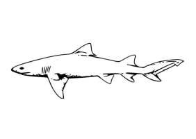 Malvorlage Hai   Kostenlose Ausmalbilder Zum Ausdrucken ...