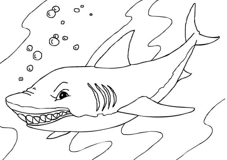 Malvorlage Hai - Kostenlose Ausmalbilder Zum Ausdrucken