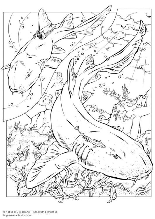 Malvorlage Haie Ausmalbild 5744