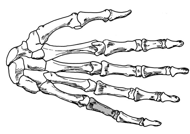 Malvorlage Hand - Skelett - Kostenlose Ausmalbilder Zum