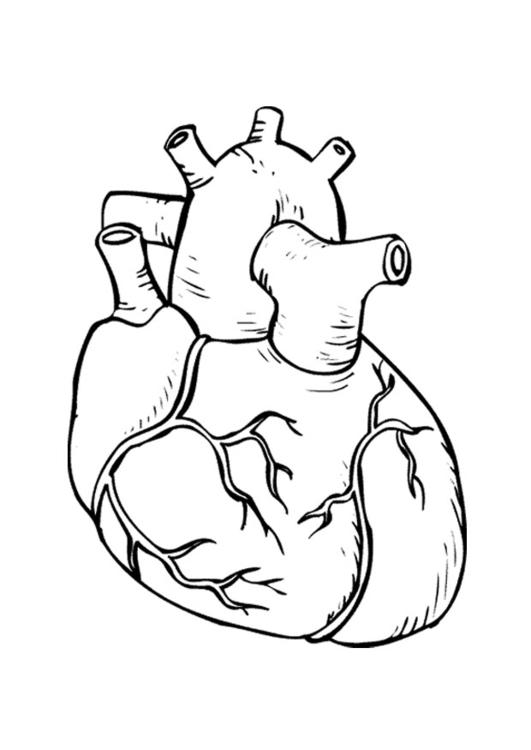 Malvorlage Herz - Kostenlose Ausmalbilder Zum Ausdrucken