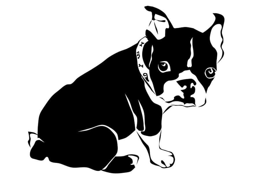 Malvorlage Hund - französische Bulldogge - Kostenlose