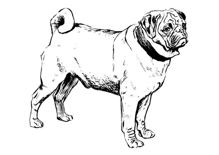 27 Gratis Malvorlage Hund Mops Beste Malvorlagen