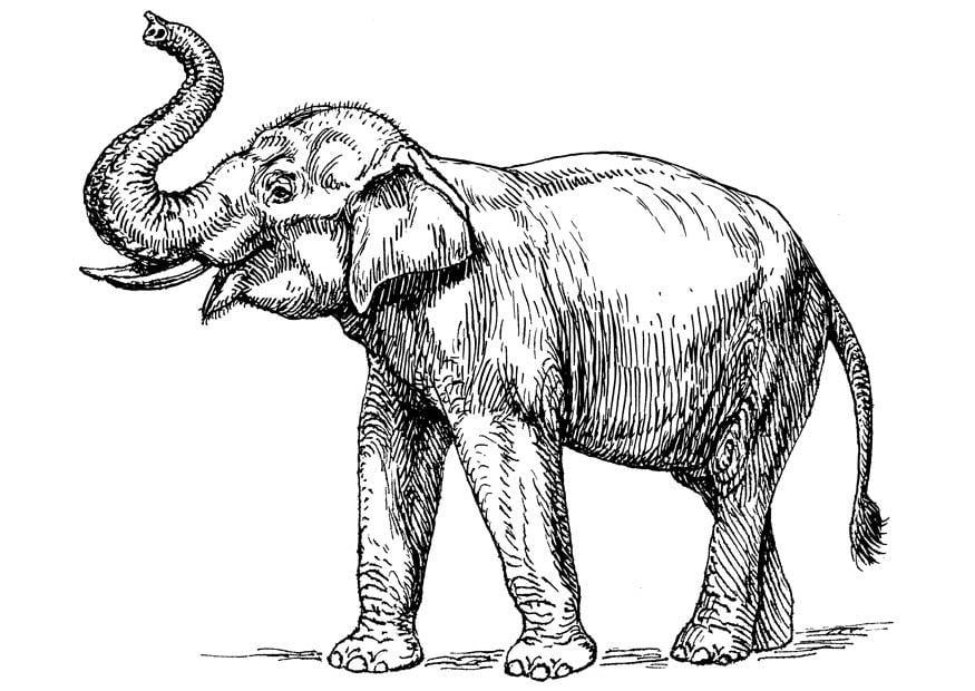 Malvorlage indischer Elefant - Kostenlose Ausmalbilder Zum