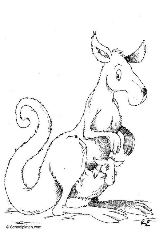Malvorlage Känguru - Kostenlose Ausmalbilder Zum