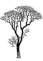 Malvorlage kahler Baum   Kostenlose Ausmalbilder Zum ...