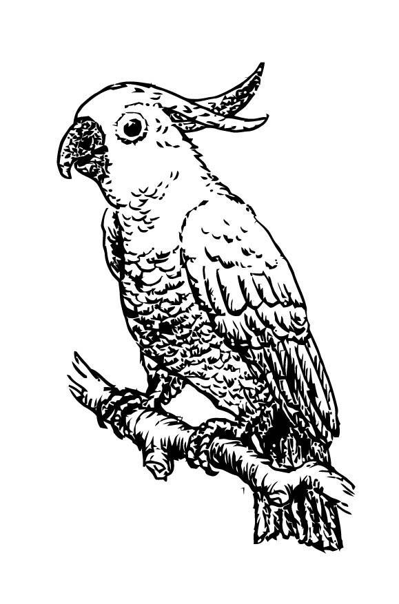 Malvorlage Kakadu - Kostenlose Ausmalbilder Zum Ausdrucken