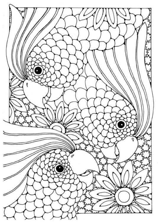 Malvorlage Kakadu Ausmalbild 15813