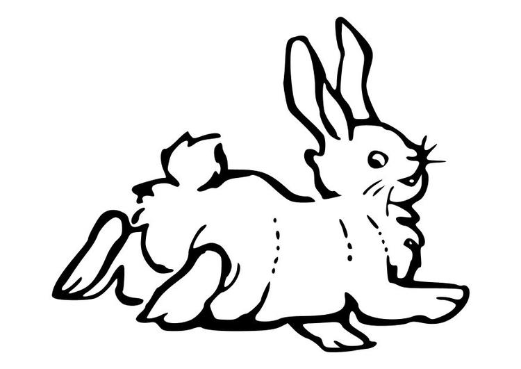Malvorlage Kaninchen - Kostenlose Ausmalbilder Zum