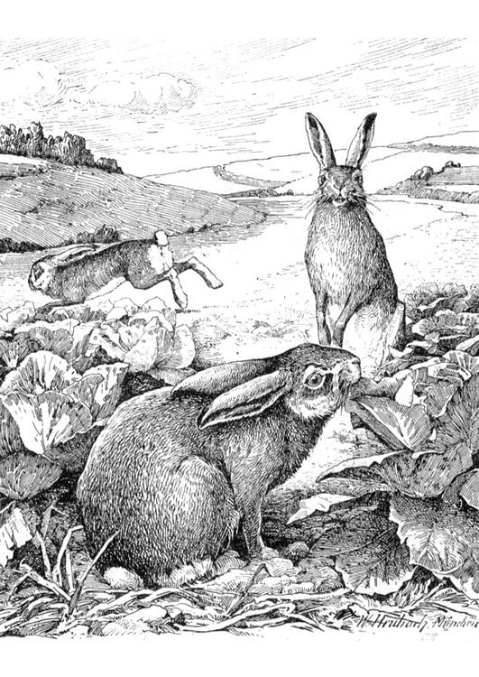 Malvorlage Kaninchen - Kostenlose Ausmalbilder Zum Ausdrucken