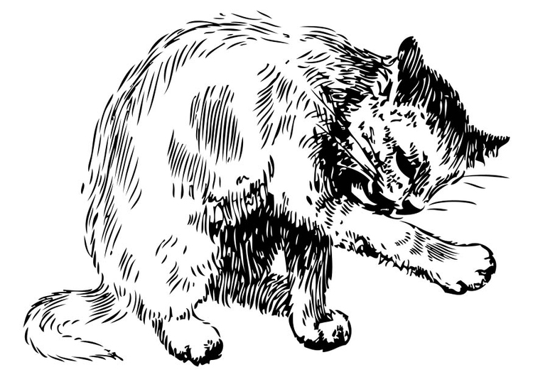Malvorlage Katze Ausmalbild 17447