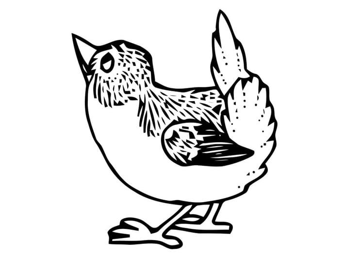 Malvorlage kleiner Vogel - Kostenlose Ausmalbilder Zum