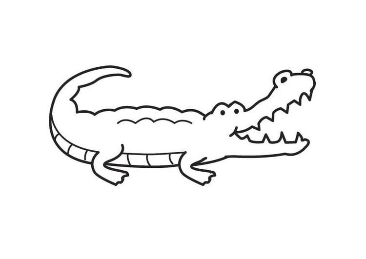 Malvorlage Krokodil - Kostenlose Ausmalbilder Zum