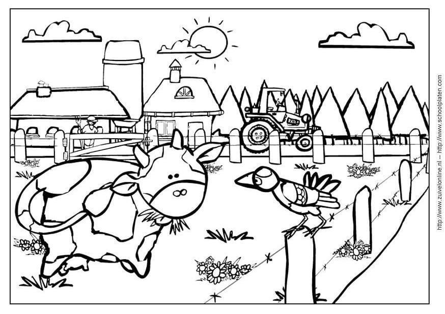 Malvorlage Kuh 2 - Kostenlose Ausmalbilder Zum Ausdrucken