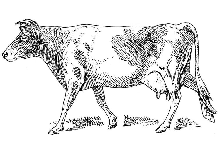 Malvorlage Kuh Ausmalbild 17474