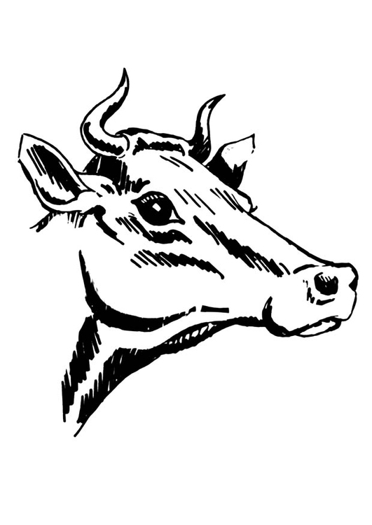 Malvorlage Kuh mit Hörnern - Kostenlose Ausmalbilder Zum