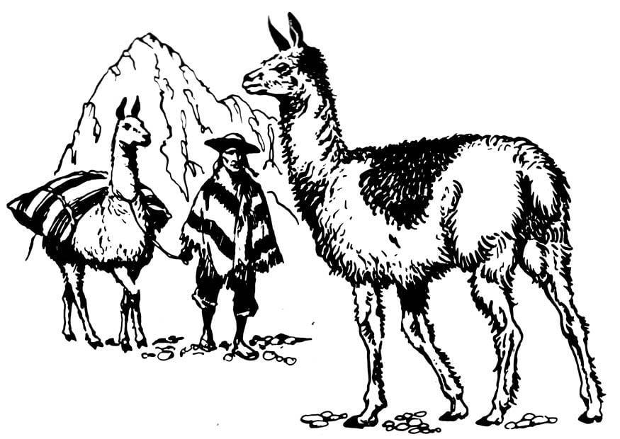 Malvorlage Lama - Kostenlose Ausmalbilder Zum Ausdrucken