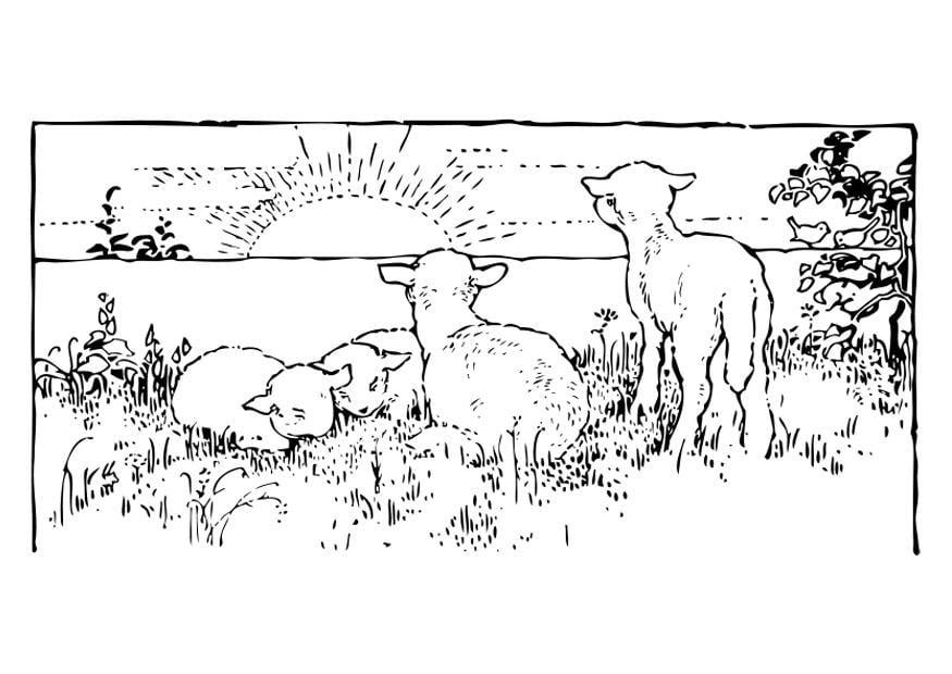 Malvorlage Landschaft Mit Lmmern Ausmalbild 27462