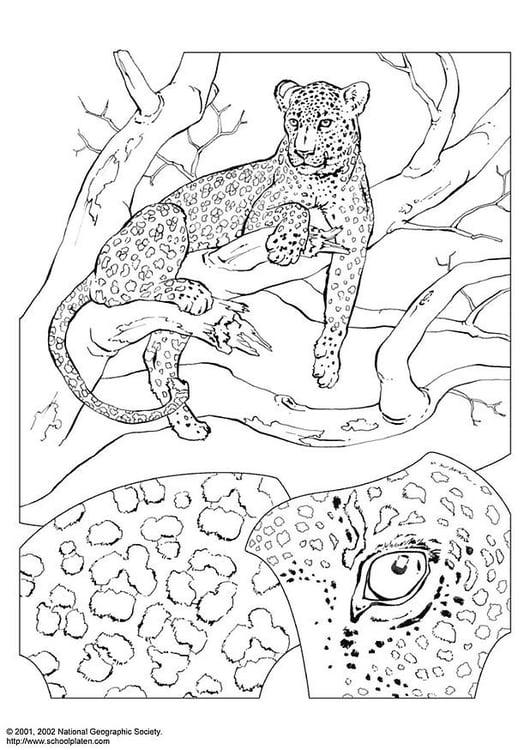 Malvorlage Leopard - Kostenlose Ausmalbilder Zum Ausdrucken