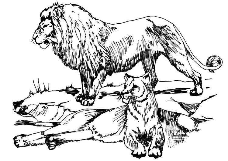 Malvorlage Löwe und Löwin Ausmalbild 16633