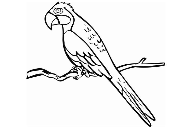 Malvorlage Papagei - Kostenlose Ausmalbilder Zum