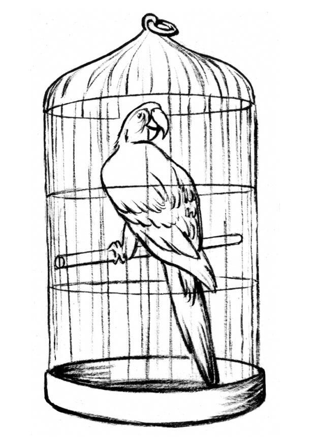 Malvorlage Papagei im Käfig - Kostenlose Ausmalbilder Zum