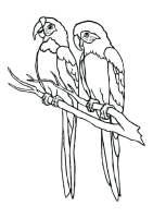 Malvorlage Papageien   Kostenlose Ausmalbilder Zum ...