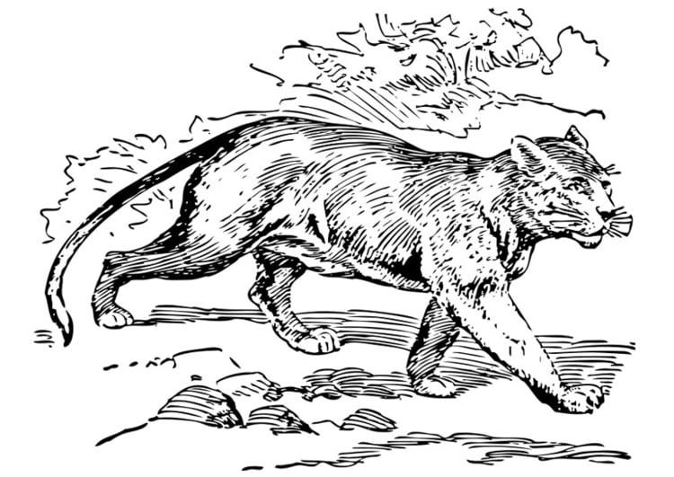 Malvorlage Puma Ausmalbild 28316