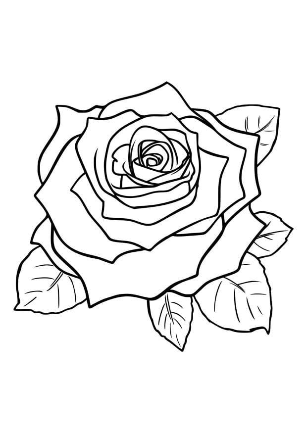 Malvorlage Rose - Kostenlose Ausmalbilder Zum Ausdrucken