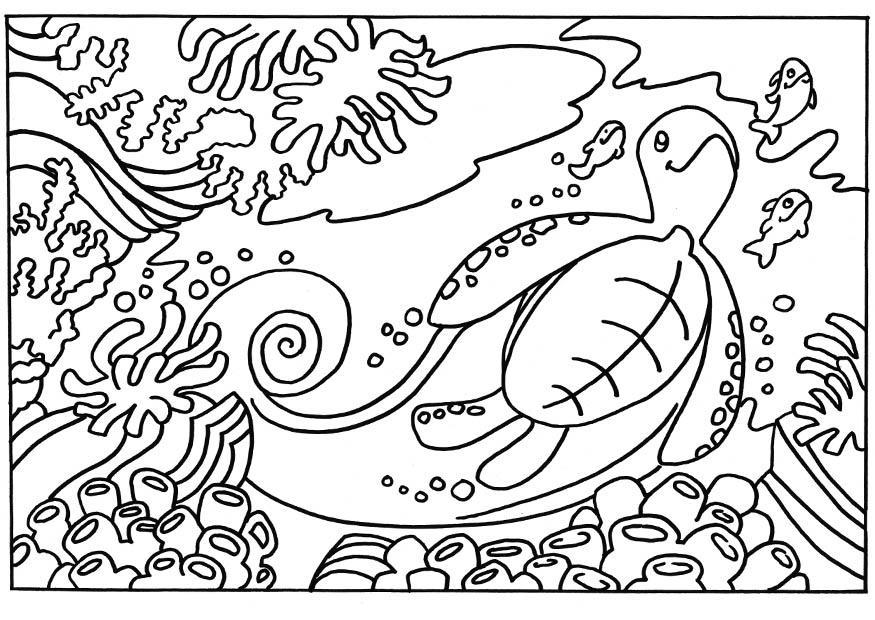 Malvorlage Schildkröte Ausmalbild 18663