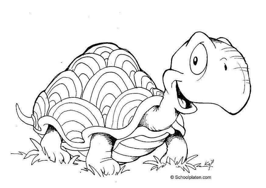 Malvorlage Schildkröte Ausmalbild 2883