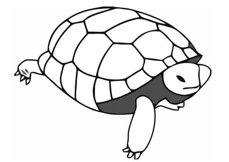 Malvorlage Schildkröte Ausmalbild 19635