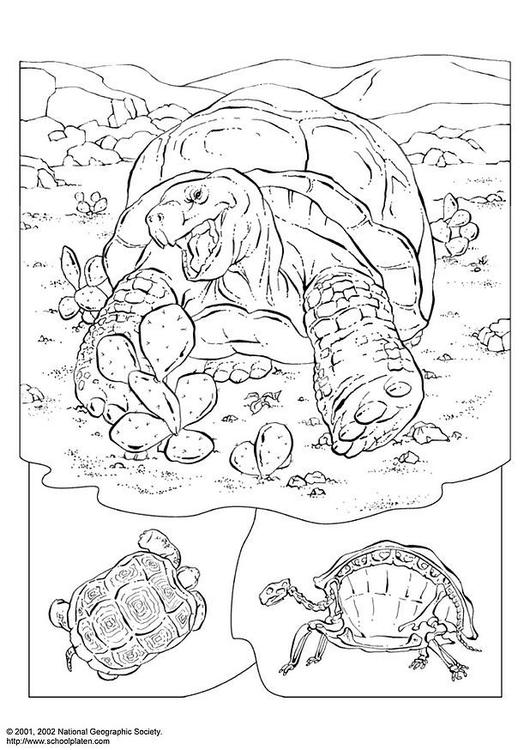 Malvorlage Schildkröte - Kostenlose Ausmalbilder Zum