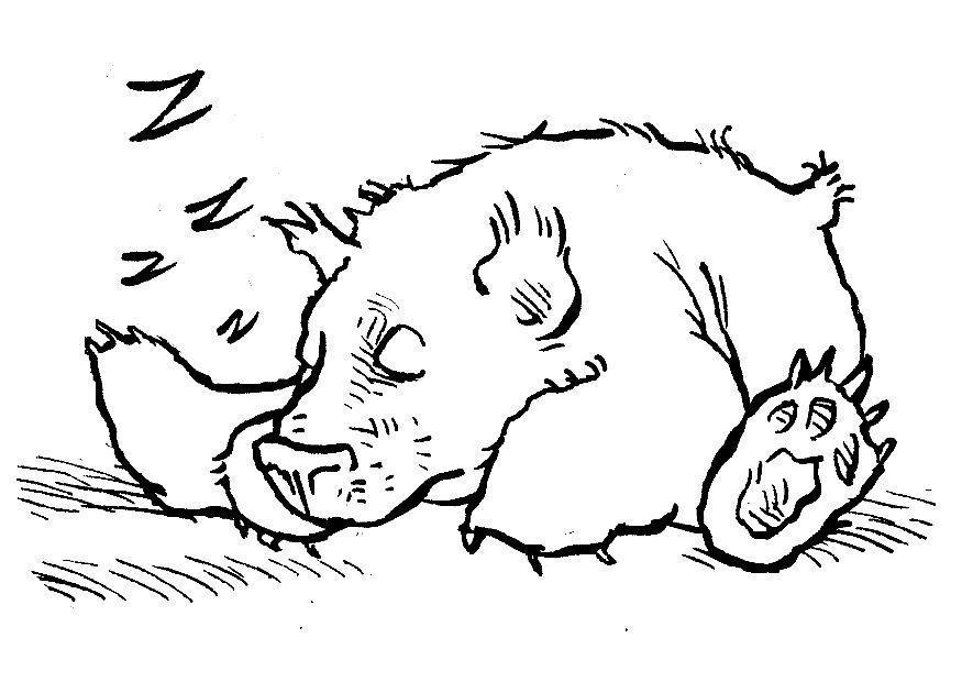 Malvorlage schlafender Bär - Kostenlose Ausmalbilder Zum
