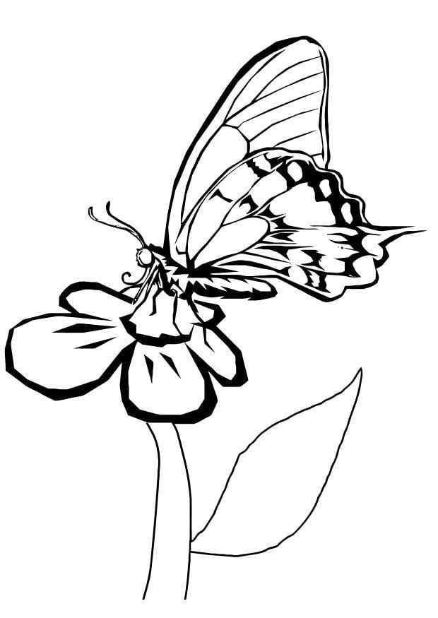 Malvorlage Schmetterling auf Blume - Kostenlose