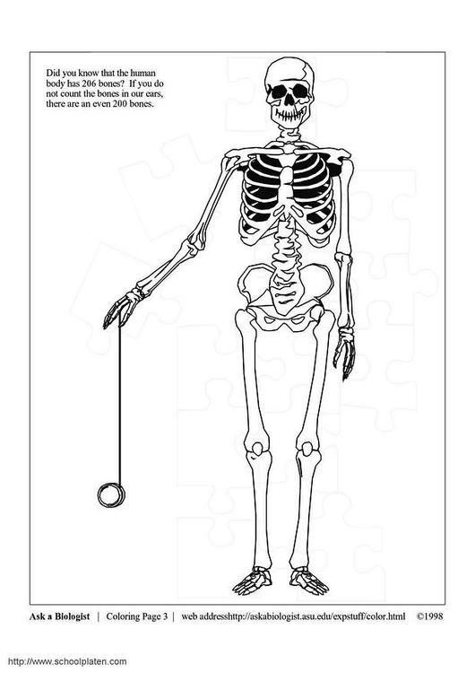Malvorlage Skelett Ausmalbild 3631