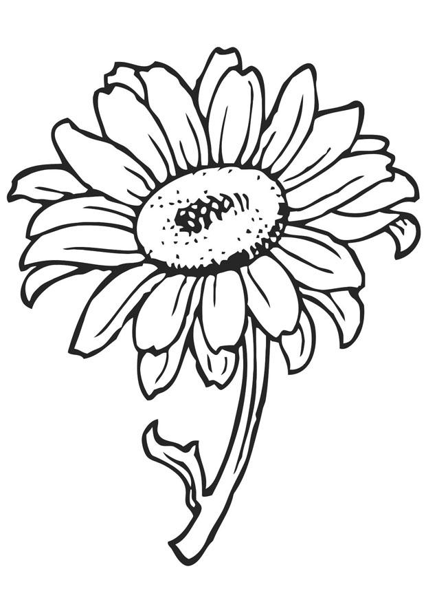 Malvorlage Sonnenblume - Kostenlose Ausmalbilder Zum