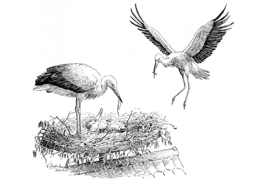 Malvorlage Storch auf dem Nest Ausmalbild 9759