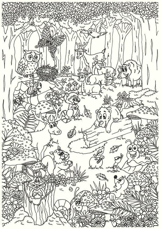 Malvorlage Tiere im Wald - Kostenlose Ausmalbilder Zum