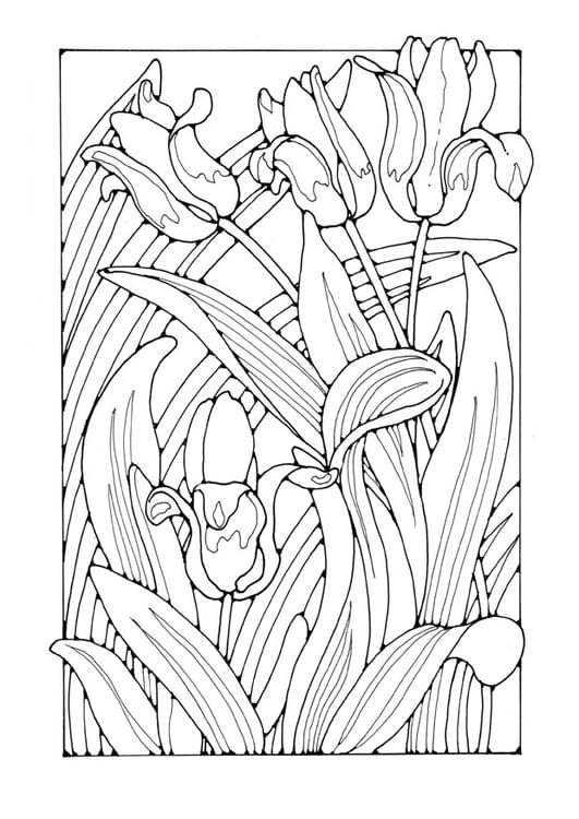Malvorlage Tulpen - Kostenlose Ausmalbilder Zum Ausdrucken