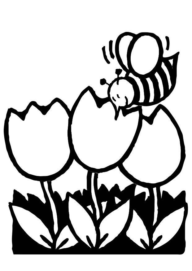Malvorlage Tulpen mit Biene - Kostenlose Ausmalbilder Zum