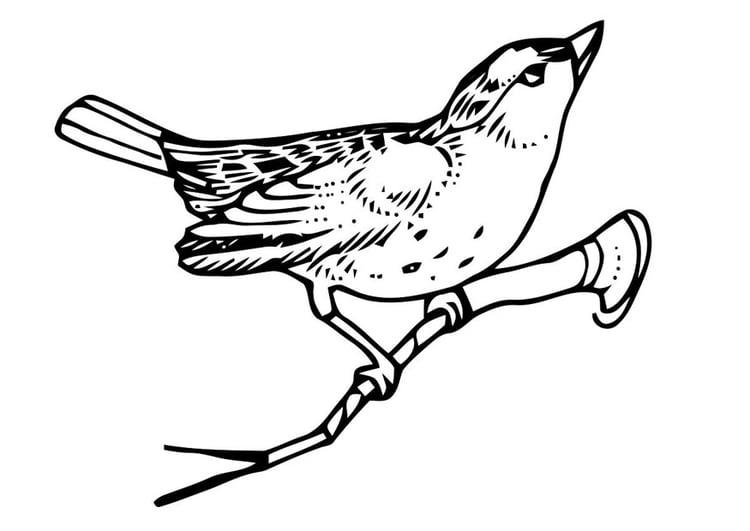 Malvorlage Vogel auf Zweig - Kostenlose Ausmalbilder Zum