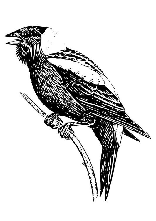 Malvorlage Vogel - Kostenlose Ausmalbilder Zum Ausdrucken