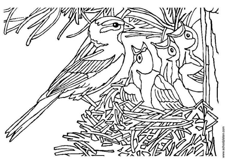 Malvorlage Vogel mit Nest - Kostenlose Ausmalbilder Zum
