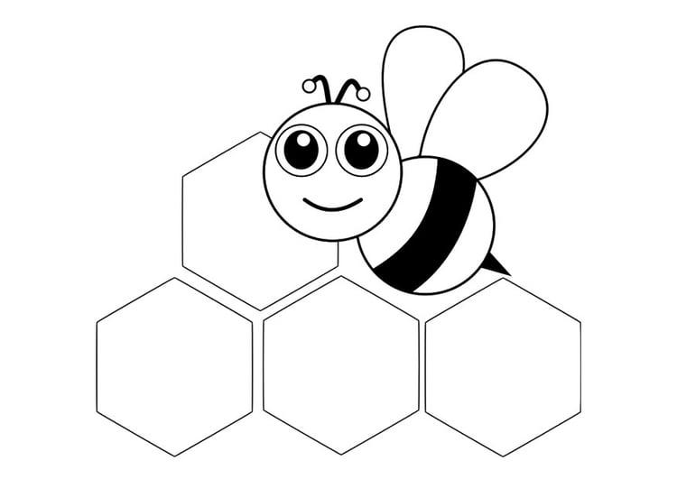 Malvorlage Vorderansicht Biene Ausmalbild 29045