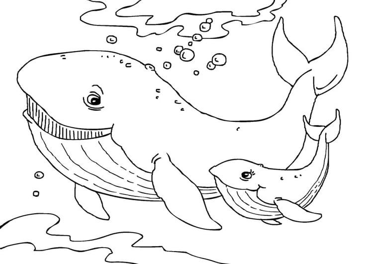 Malvorlage Wale - Kostenlose Ausmalbilder Zum Ausdrucken