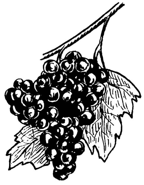 Malvorlage Weintrauben - Kostenlose Ausmalbilder Zum