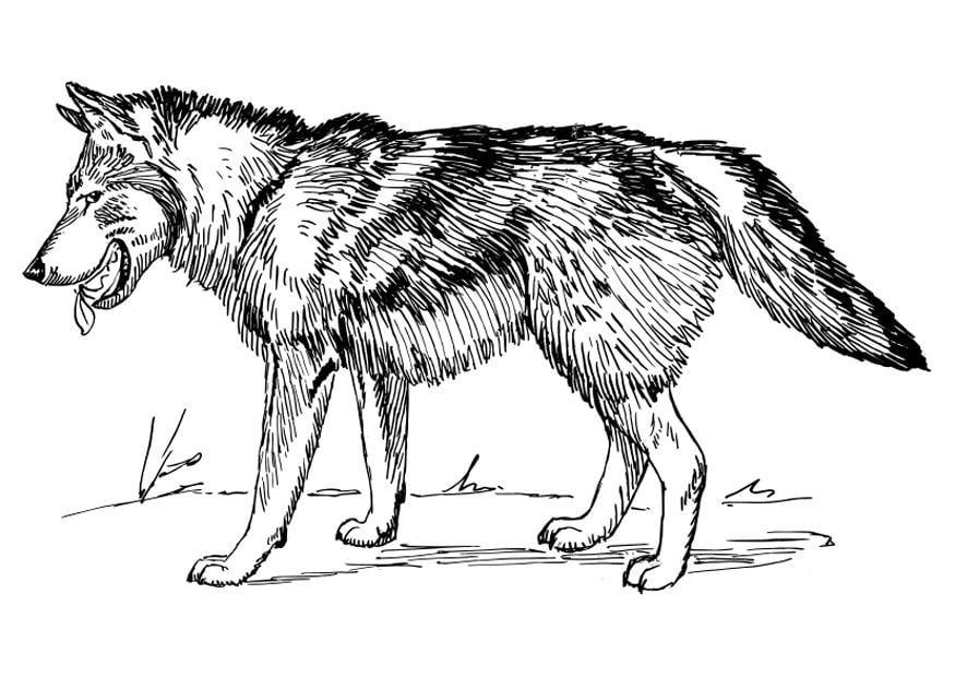 Malvorlage Wolf - Kostenlose Ausmalbilder Zum Ausdrucken