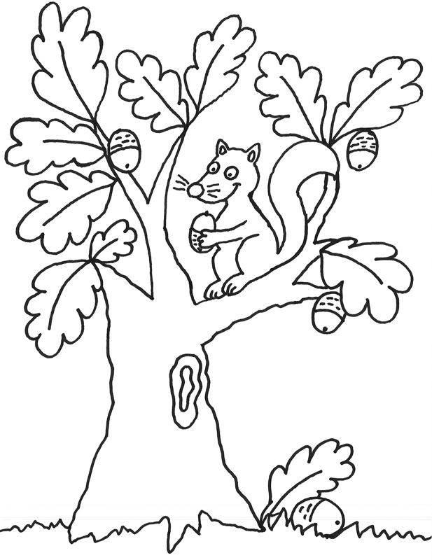 Ausmalbild Bäume Eichhoernchen auf dem Baum kostenlos